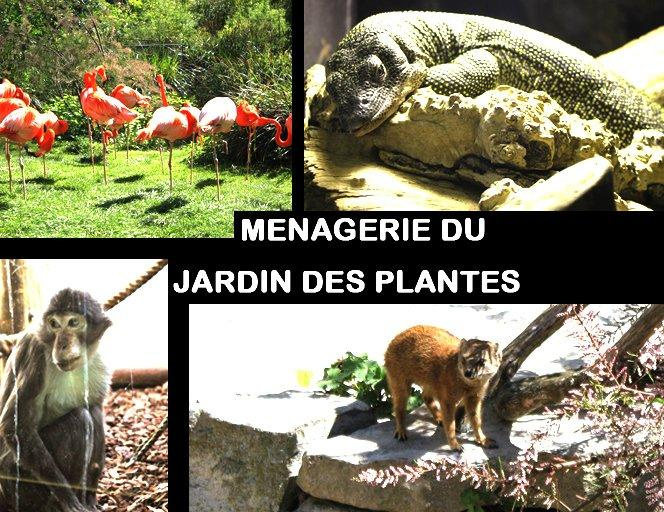 Ménagerie, the zoo of the Jardin des Plantes: the oldest zoo ...
