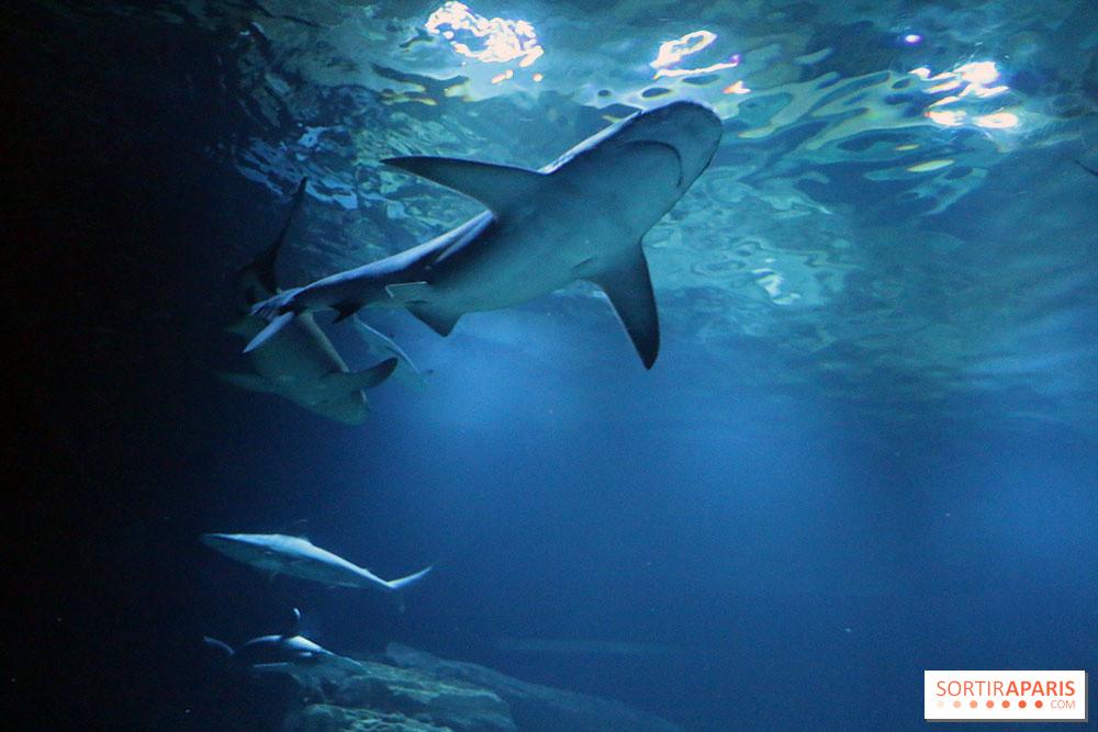 Zig Sharko Débarquent à L Aquarium De Paris Sortiraparis Com