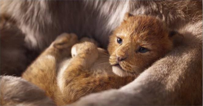 412488-le-roi-lion-revient-au-cinema-en-2019-decouvrez-la-bande-annonce-2