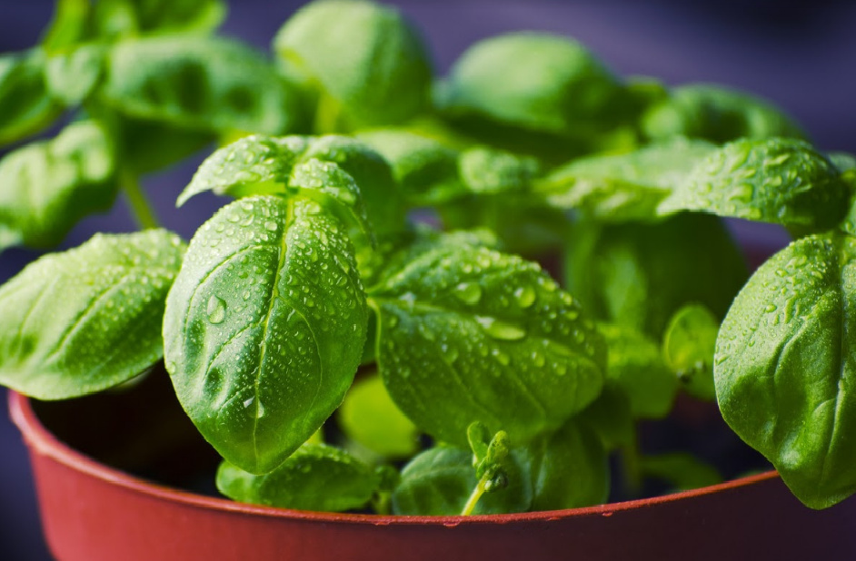 Herbes Aromatiques D Intérieur vente exceptionnelle de plantes aromatiques, potagères, et d