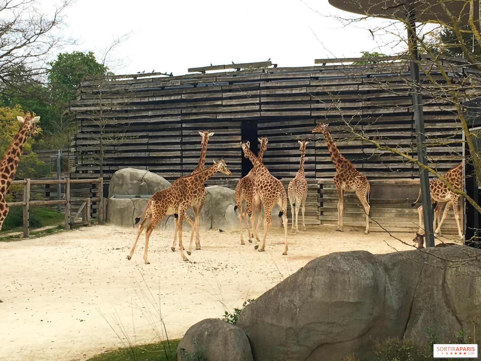 Le Guide Des Zoos Et Ménageries à Paris Et Ses Alentours Sortiraparis Com