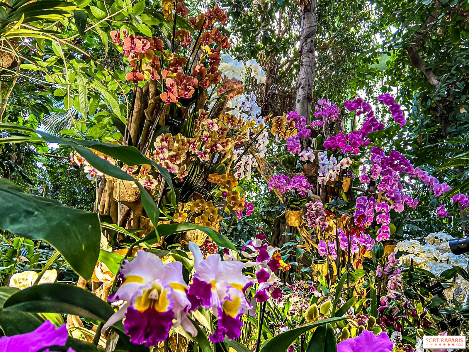 Comment S Occuper D Un Orchidée mille et une orchidées au jardin des plantes 2020 - vidéo