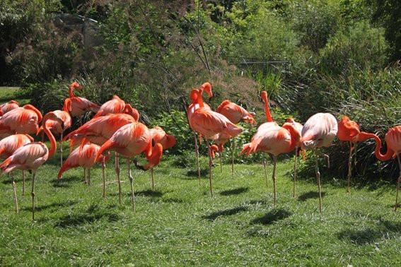 Album photos la m nagerie du jardin des plantes le plus - Zoo jardin des plantes ...