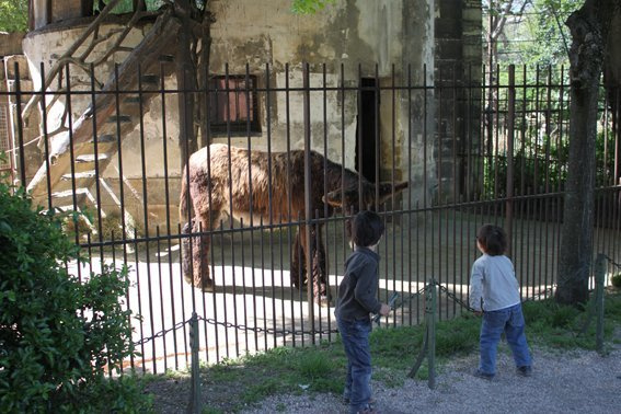 Photo la m nagerie du jardin des plantes la m nagerie du jardin des plantes le plus vieux - Zoo du jardin des plantes tarifs ...