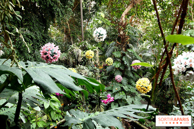 photo 2 mille une orchid es 2014 l 39 exposition au jardin des plantes. Black Bedroom Furniture Sets. Home Design Ideas