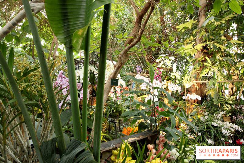 photo mille une orchid es 2014 l 39 exposition au jardin des plantes. Black Bedroom Furniture Sets. Home Design Ideas