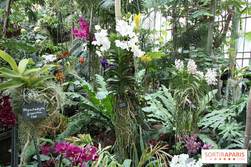 Emejing orchidee de jardin belgique pictures amazing for Plantes belgique
