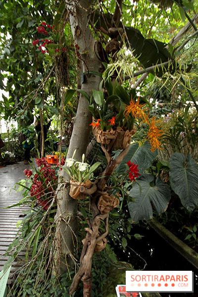 photo 34 mille une orchid es 2014 l 39 exposition au jardin des plantes. Black Bedroom Furniture Sets. Home Design Ideas