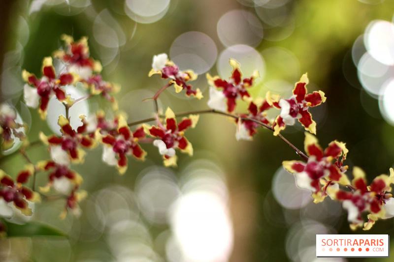 album photos mille une orchid es 2014 l 39 exposition au jardin des plantes. Black Bedroom Furniture Sets. Home Design Ideas