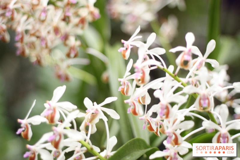 photo 47 mille une orchid es 2014 l 39 exposition au jardin des plantes. Black Bedroom Furniture Sets. Home Design Ideas