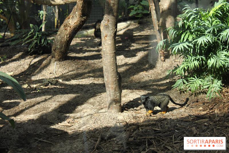 photo zoo de vincennes parc zoologique de zoo de vincennes parc zoologique de