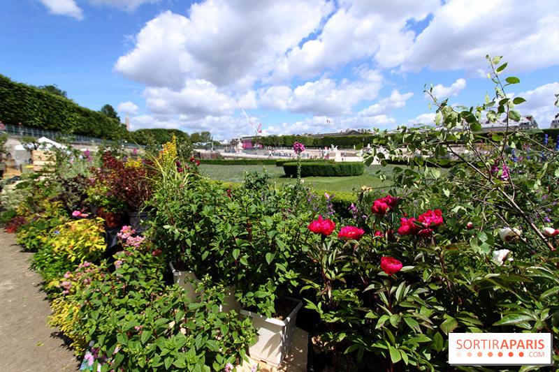 Album photos jardins jardin aux tuileries 2014 for Jardin aux tuileries