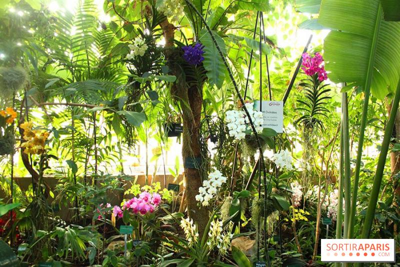photo 5 1001 orchid es 2015 au jardin des plantes