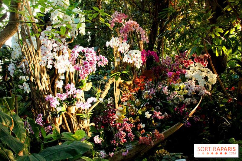 photo 2 1001 orchid es 2015 au jardin des plantes