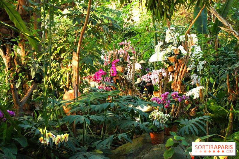 album photos 1001 orchid es 2015 au jardin des plantes