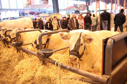 Photo 11 salon de l 39 agriculture 2012 for Place gratuite salon de l agriculture