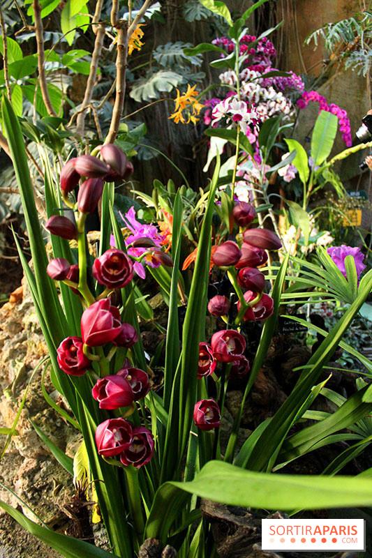 Emejing orchidee de jardin vente photos amazing house for Jardin des plantes orchidees 2016