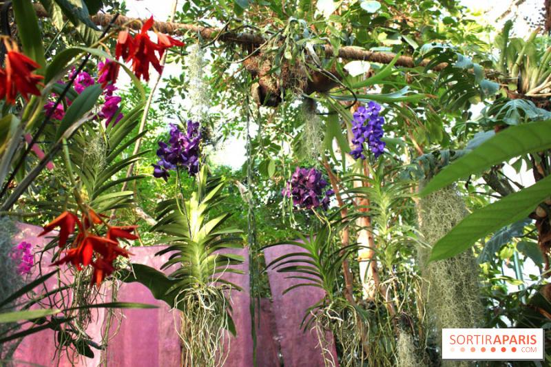 En fleurs vous attendent dans les serres du jardin des plantes