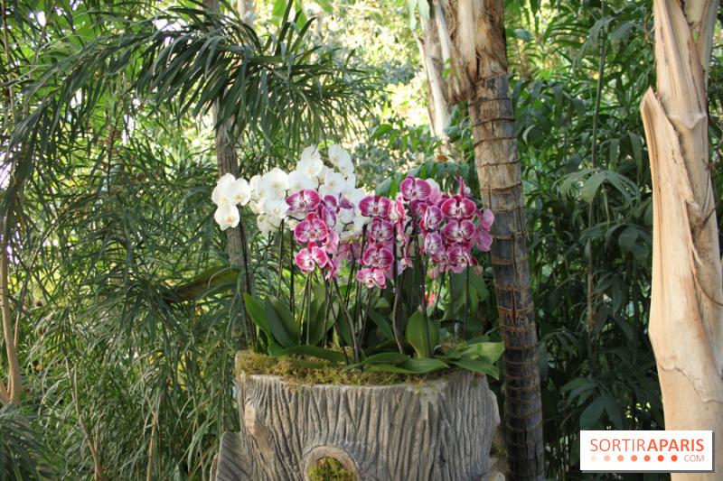 photo 12 exposition mille une orchid es au jardin des plantes. Black Bedroom Furniture Sets. Home Design Ideas