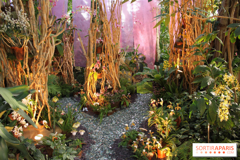 Photo - Exposition Mille & une orchidées au Jardin des Plantes
