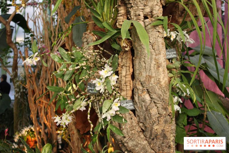 photo 2 exposition mille une orchid es au jardin des plantes. Black Bedroom Furniture Sets. Home Design Ideas