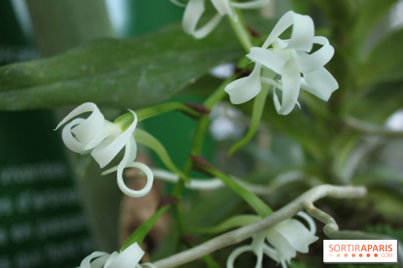 photo 23 exposition mille une orchid es au jardin des plantes. Black Bedroom Furniture Sets. Home Design Ideas