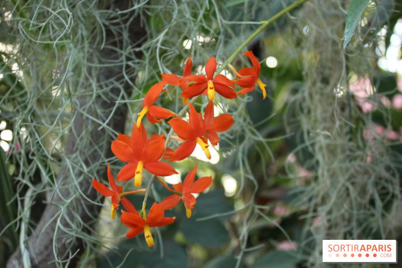 photo 25 exposition mille une orchid es au jardin des plantes. Black Bedroom Furniture Sets. Home Design Ideas