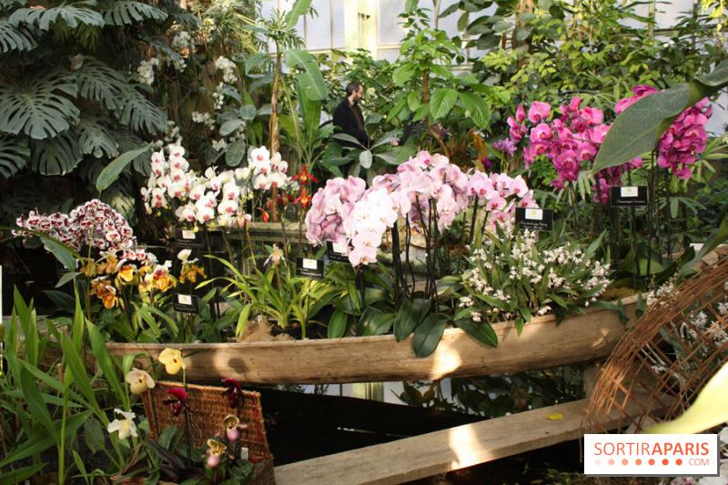 photo 35 exposition mille une orchid es au jardin des plantes. Black Bedroom Furniture Sets. Home Design Ideas