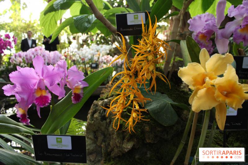 photo 37 exposition mille une orchid es au jardin des plantes. Black Bedroom Furniture Sets. Home Design Ideas