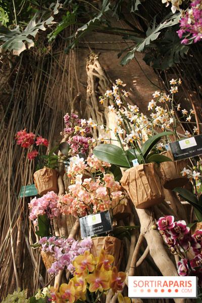 photo 38 exposition mille une orchid es au jardin des plantes. Black Bedroom Furniture Sets. Home Design Ideas