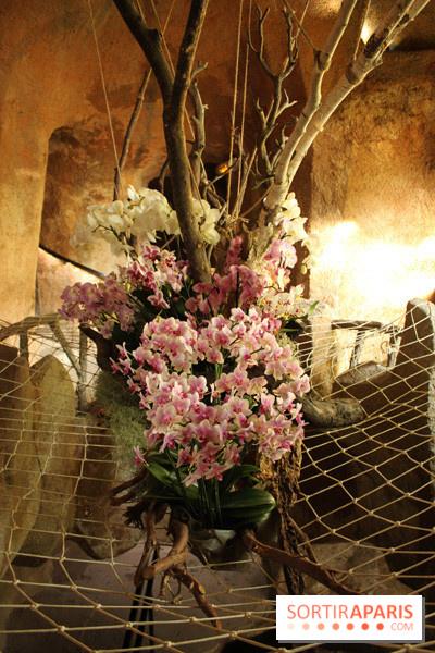 photo 40 exposition mille une orchid es au jardin des plantes. Black Bedroom Furniture Sets. Home Design Ideas