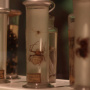 Au fil des araignées MNHN
