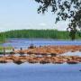 Paysage finlandais
